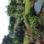 Enaleni Farm- courtesy of CLP 008