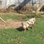 Enaleni Farm- courtesy of CLP 014
