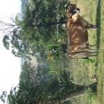 Enaleni Farm- courtesy of CLP 018