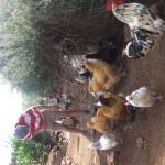 Enaleni Farm- courtesy of CLP 040