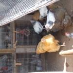 Enaleni Farm- courtesy of CLP 045