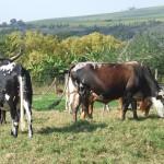 Enaleni Farm- courtesy of CLP 058