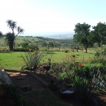 Enaleni Farm- courtesy of CLP 110