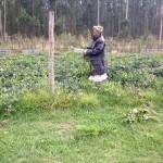 Gogo Zondi on her farm